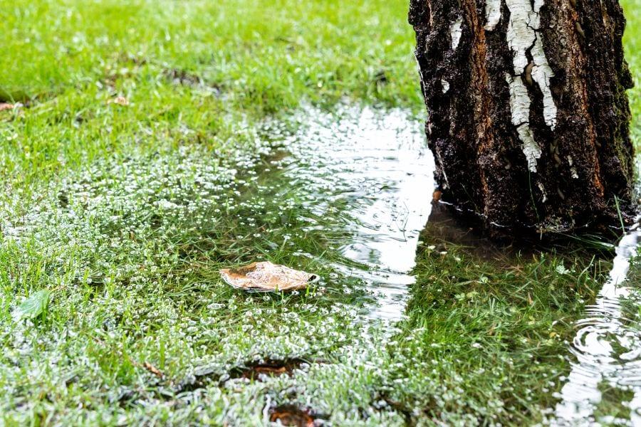 Flooded Lawn Near Tree