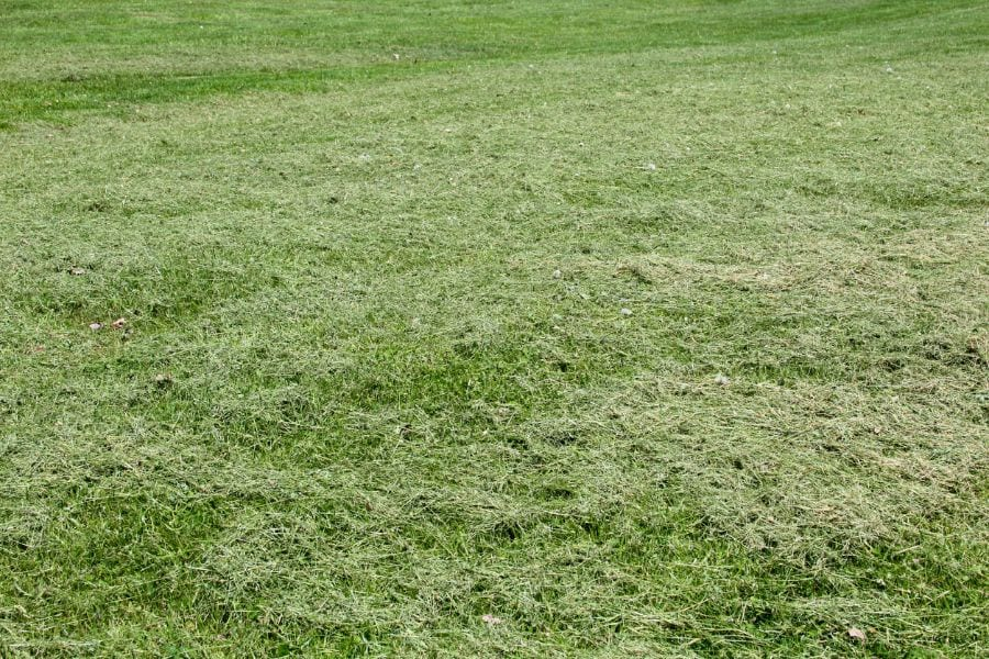 Grass Clippings on Lawn