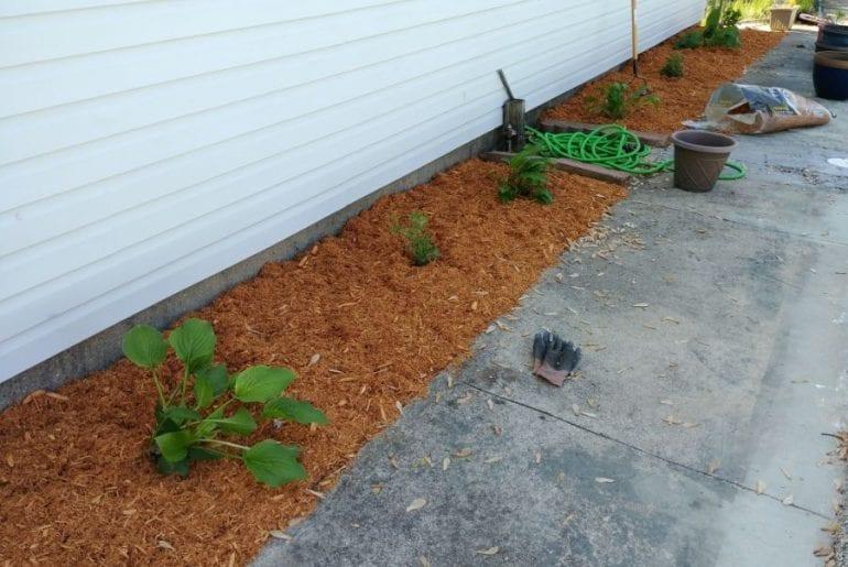 Plants in Mulch