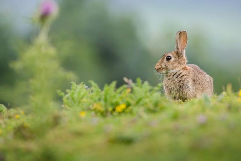 Rabbit Sitting in Meadow