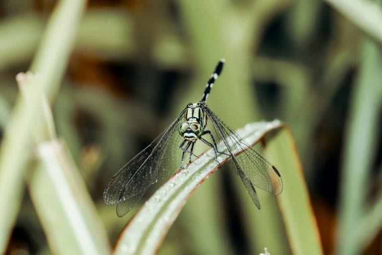 Dragonfly in Yard