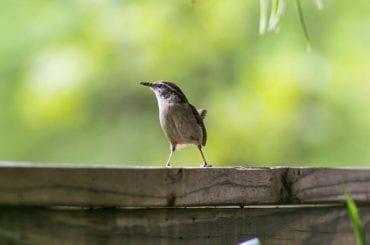 Bird Near House