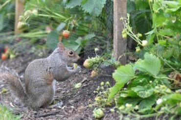 Squirrel in Garden