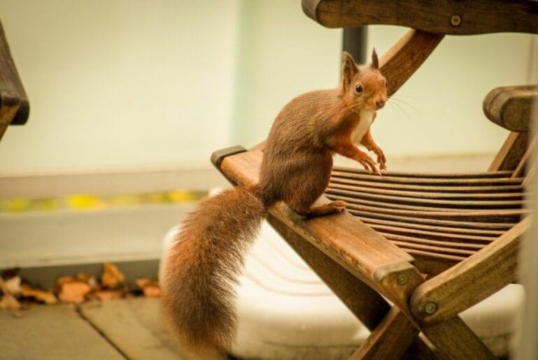 Squirrel on Patio