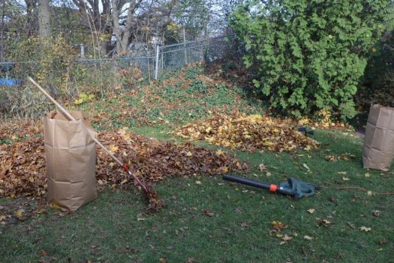 Leaf Blower and Rake