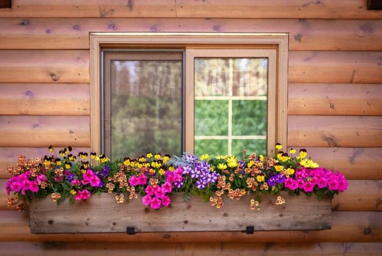 Window With Window Box Full of Flowers