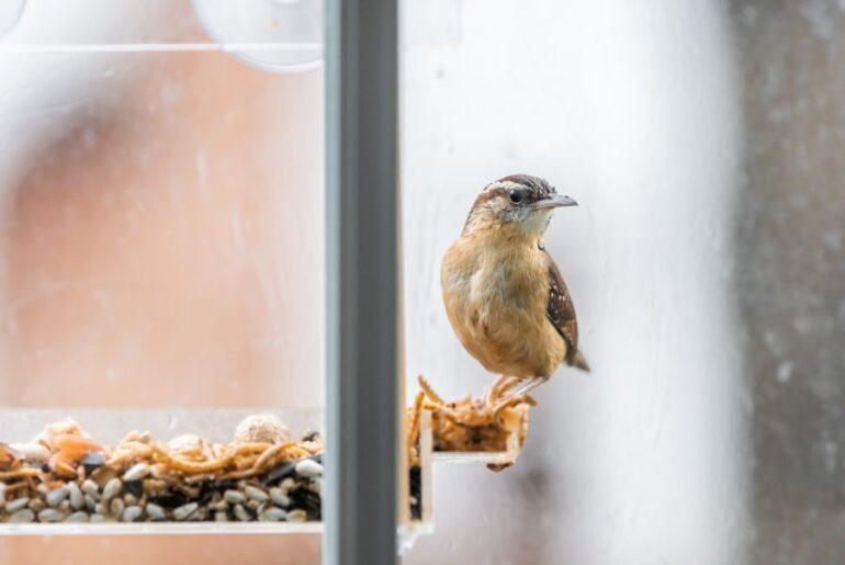 Bird Near Bird Food