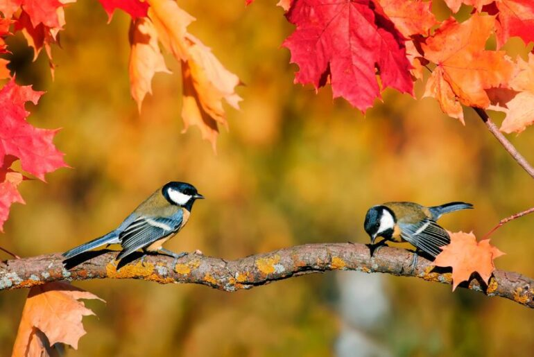A Couple of Birds Sitting on a Tree Branch in Autumn