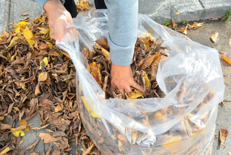 Bagging Leaves by Hand