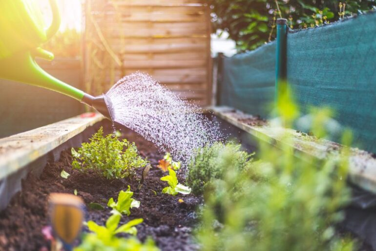 Watering a Raised Bed Garden
